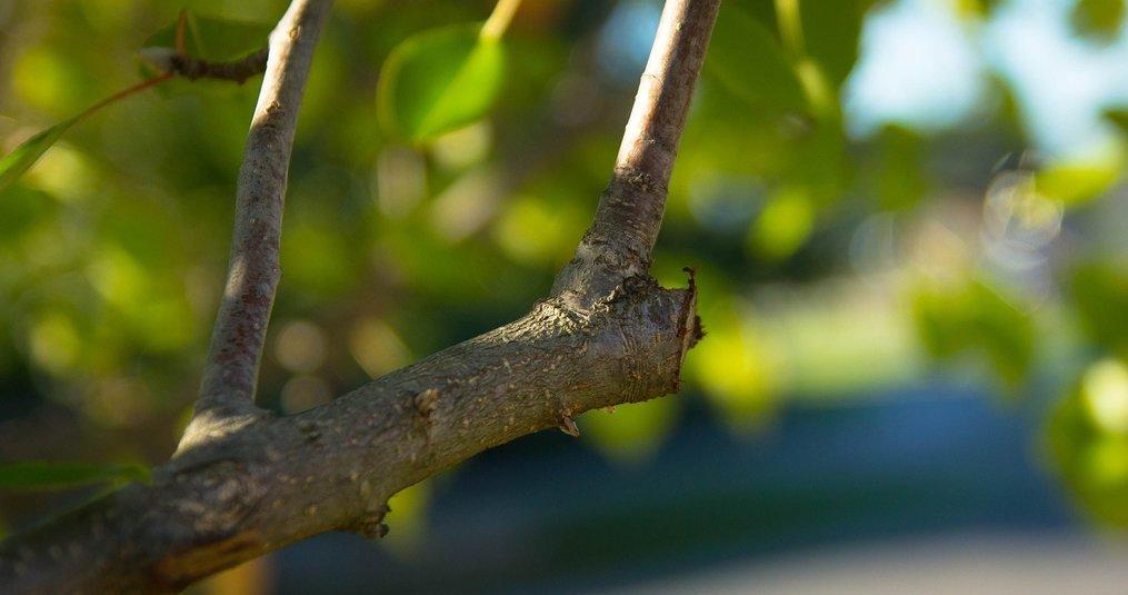 Alles wat je moet weten over bomen snoeien