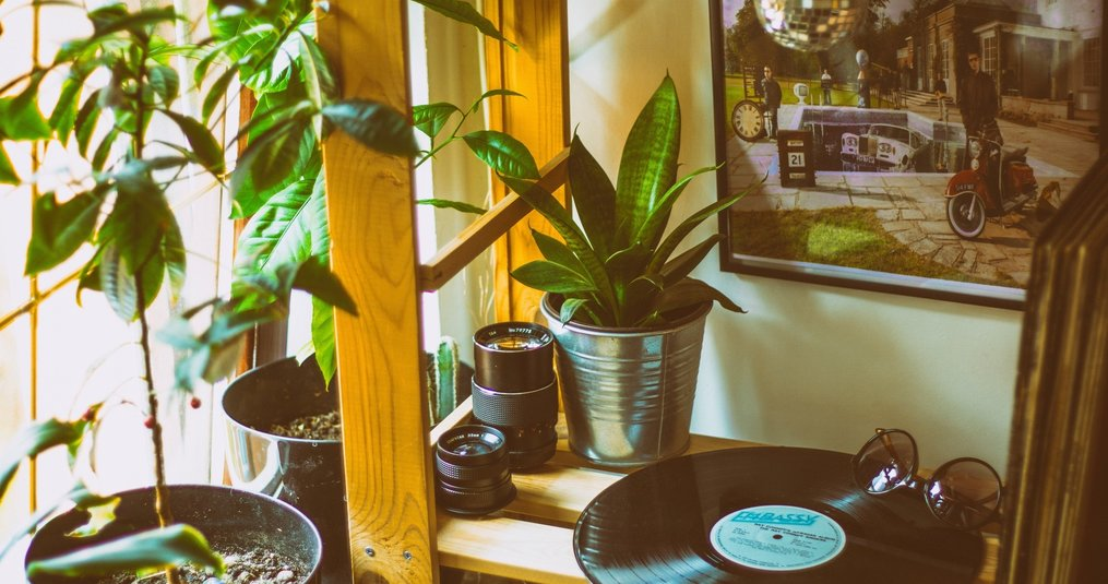 De vele verschillende soorten plantenbakken