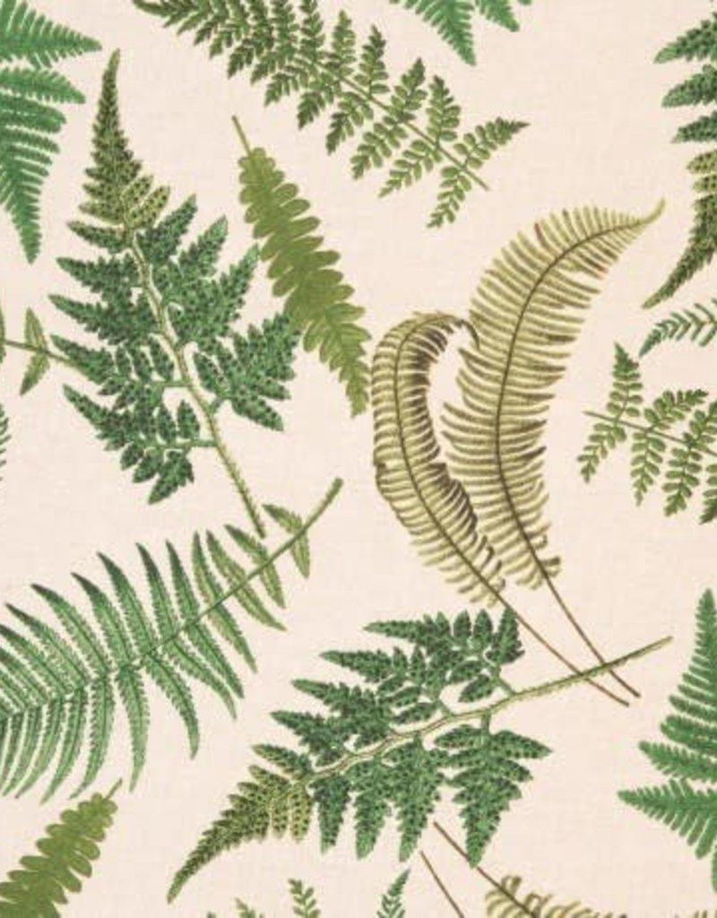 Emilia leaves green