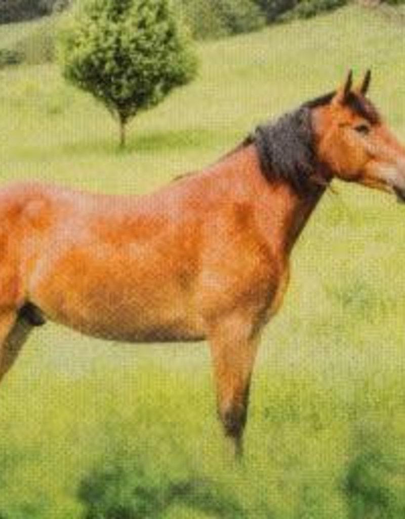 Tiffy Horses