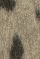 Fritzi leopard