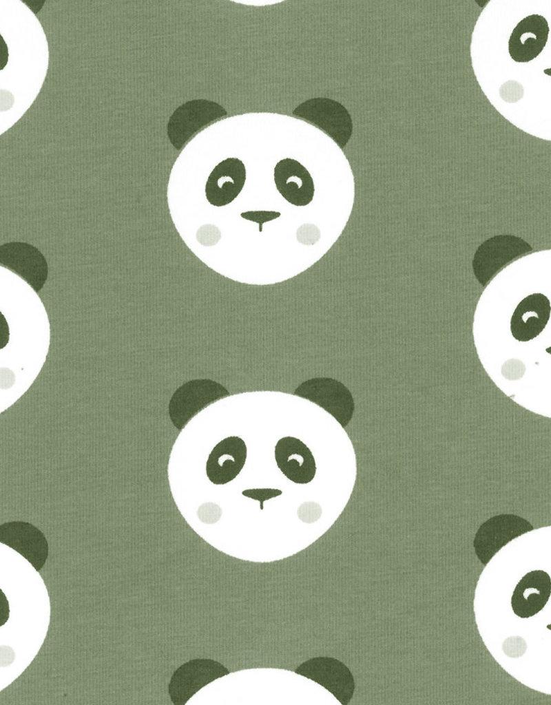Panda kaki