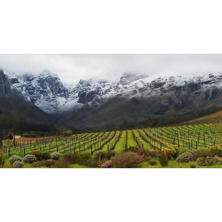 Oldenburg Chardonnay 2019
