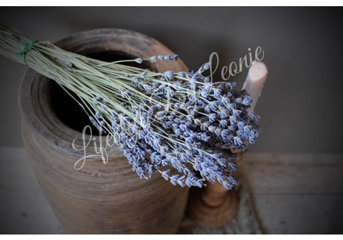 LifestyleByLeonie Bos gedroogde Zuid-Franse lavendel