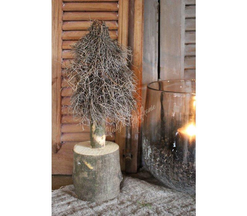 Euphorbia boom op stam 30 cm