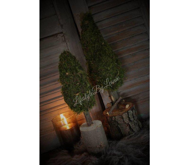 Mos boom op stam 40 cm