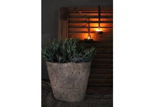Plant Hertshoorn 25 cm