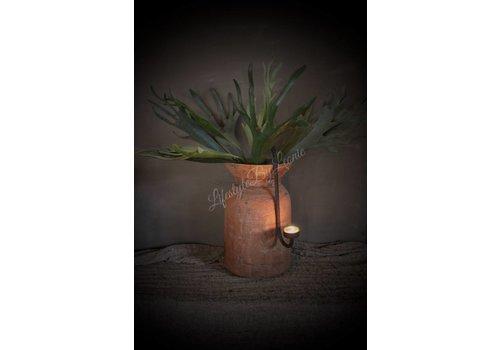 Plant Hertshoorn 52 cm