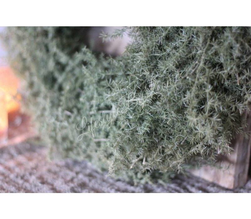 Groene wilde asparagus krans 50 cm