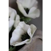 Zijden Anemoon wit 31 cm