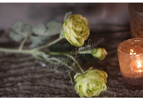 LifestyleByLeonie Zijden Ranonkel groen 55 cm