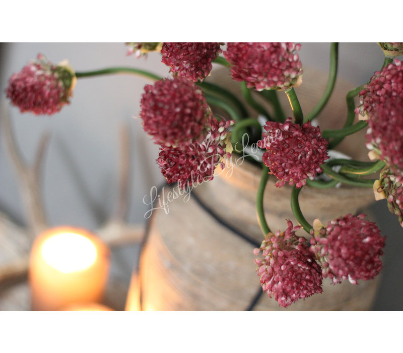 Zijden Allium tak garlic paars