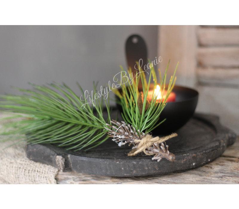 Groene Pinus tak