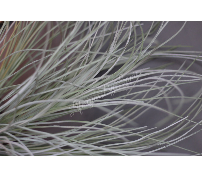 Grote grass bush Grey wash 72 cm