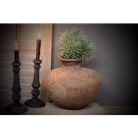 Namaak pine grass 32 cm
