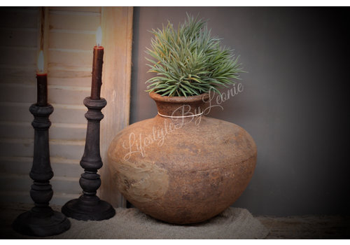 LifestyleByLeonie Namaak pine grass 32 cm