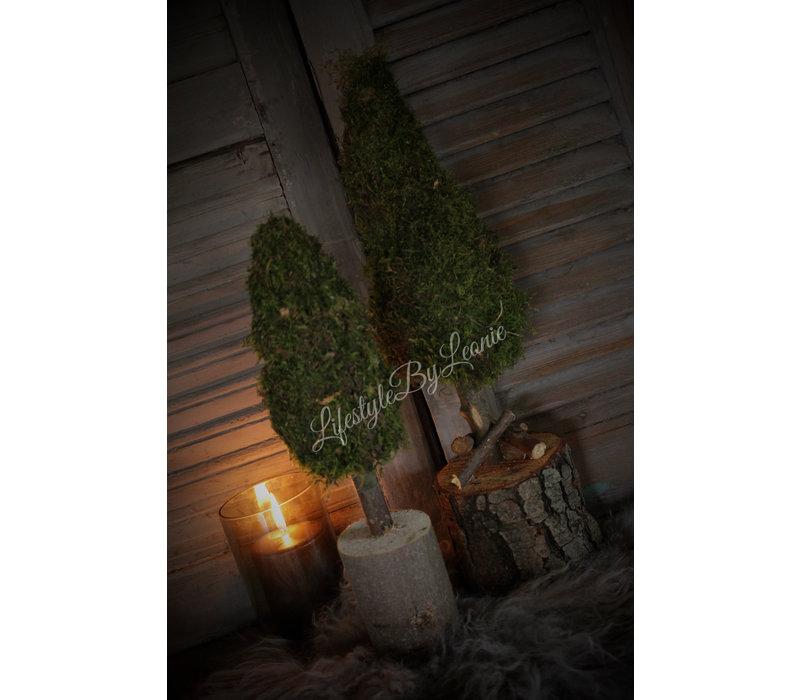 Mos boom op stam 50 cm