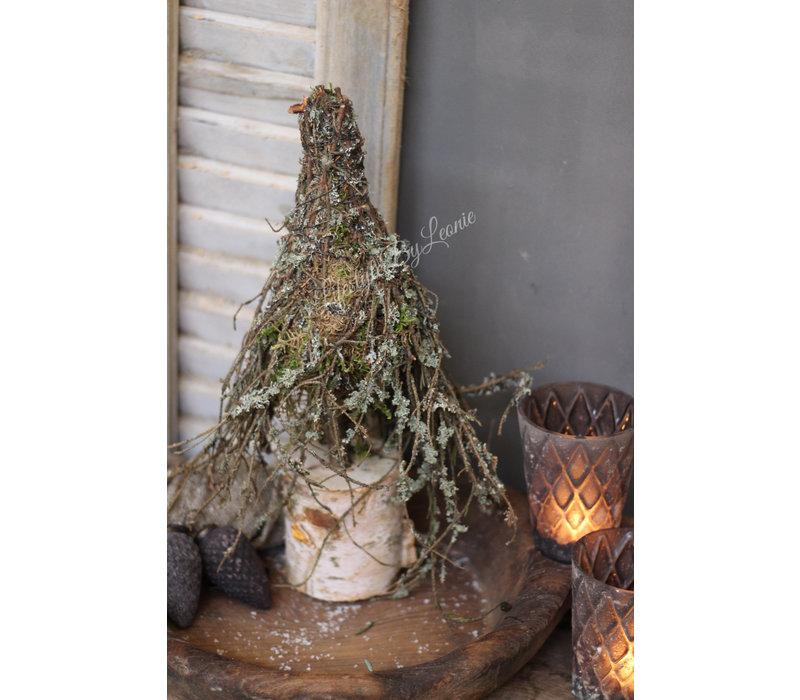 Larix mos boom 40 cm