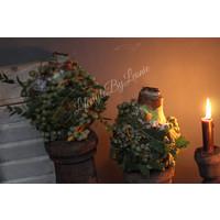 Amaryllis mos bal/ dadels