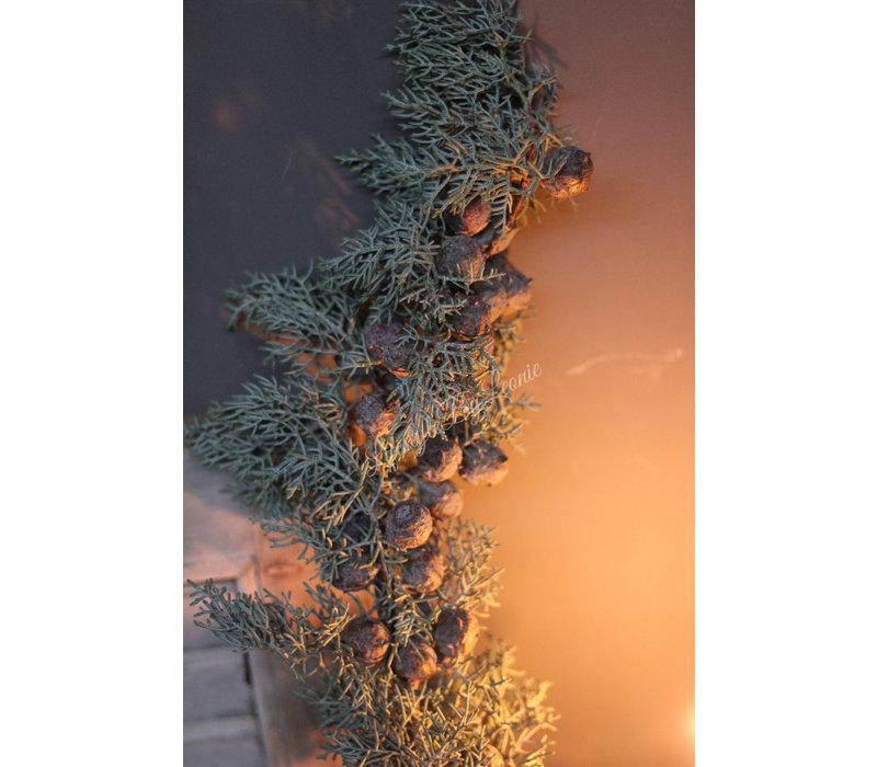 Cupressus arizonica per tak