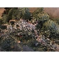 Krans nobilis / bonsai / cupresus 30 cm