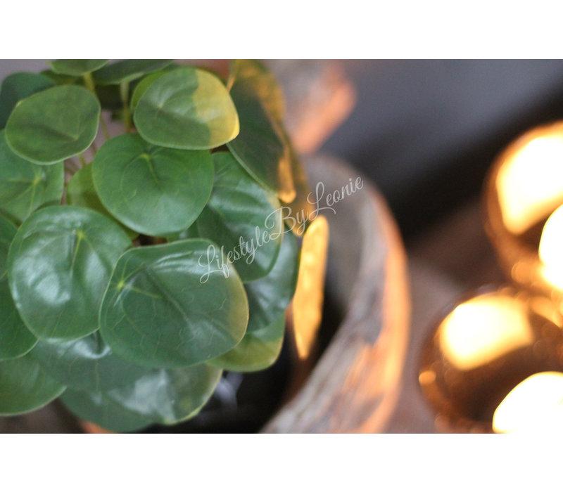 Groen pannenkoekplantje 30 cm