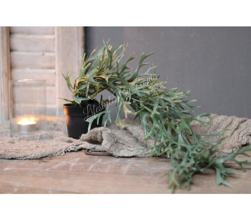 Namaak hang Hertshoorn in pot 43 cm