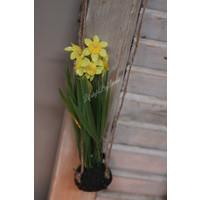 Namaak Narcis op bol 22 cm