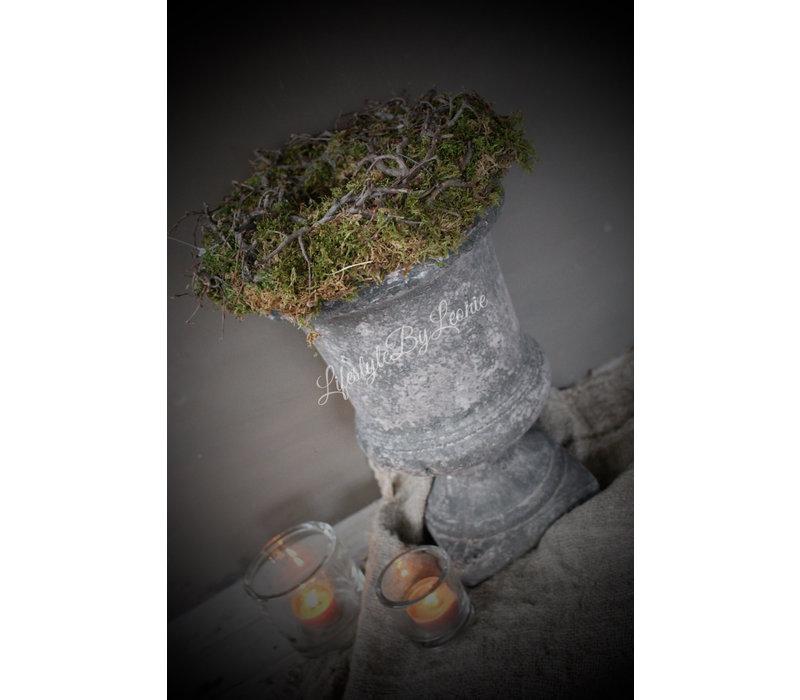 Moskrans bonsai groen 25 cm