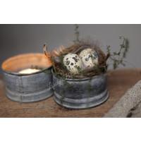 Nestje met 2 eitjes en veren