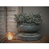 LifestyleByLeonie Asparagus wax krans Olive 25 cm