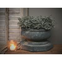 Asparagus wax krans Olive 25 cm