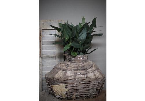 LifestyleByLeonie Bos eucalyptus potlood