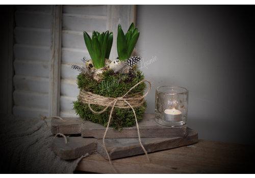 LifestyleByLeonie Hyacinth in mos jasje Easter