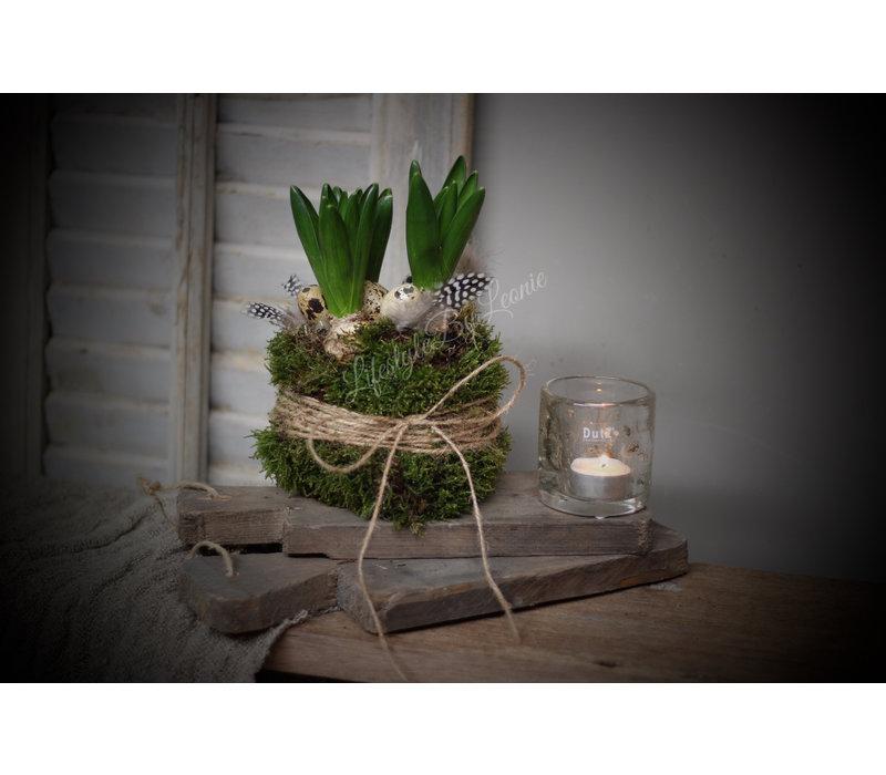 Hyacinth in mos jasje Easter