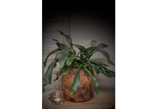 LifestyleByLeonie Hersthoorn plant