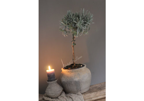 LifestyleByLeonie Lavendel boompje op stam
