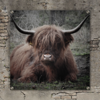 Tuinposter doek Buffel / Hooglander 100 cm