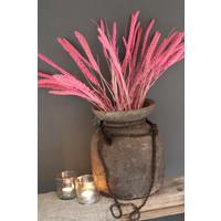 Bos gedroogde Setaria roze