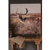 Tuinposter / doek Damhert 100 cm