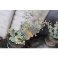 Zijden baby Eucalyptus tak 65 cm
