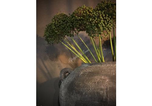 Allium zaaddoos per tak