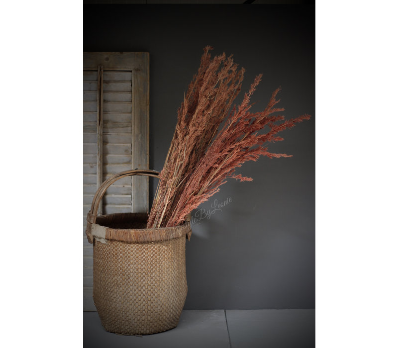 Bos gedroogd Alfonso grass 100 cm