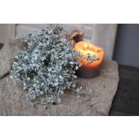 Brynxz namaak Gingko bush 25 cm