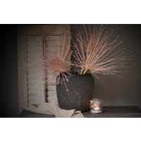 Grote Allium schubertii - per bol