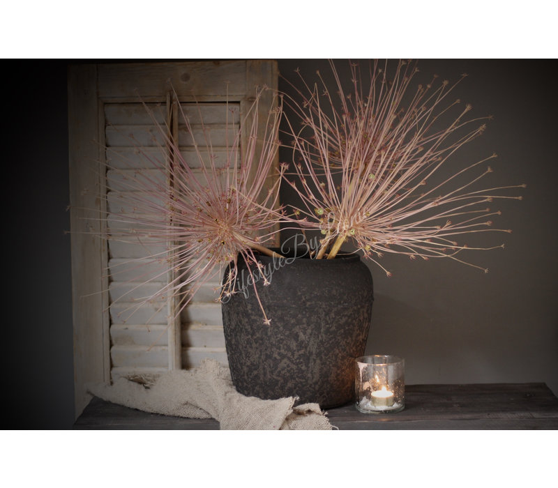 Grote Allium Schubertii bol
