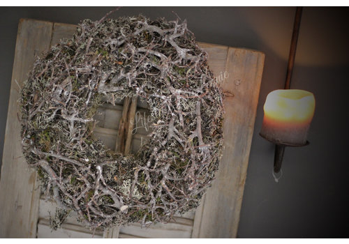 Grijze krans bonsai met mos 30 cm