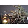 Namaak groen tak Seeded 71 cm
