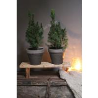 Kerstboompje in stenen pot