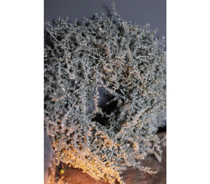 Asparagus waxkrans 25 cm